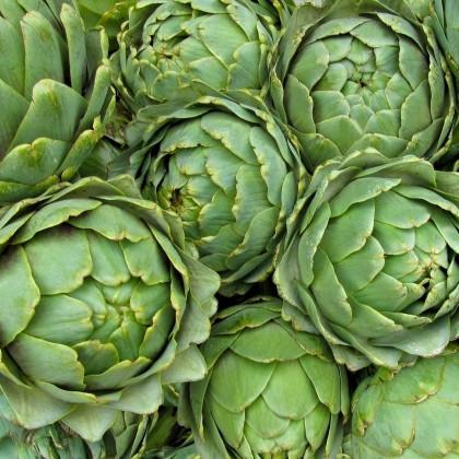 Artičoka zelená Grosse von Laon - Cynara scolymus - semená artičoky - 20 ks