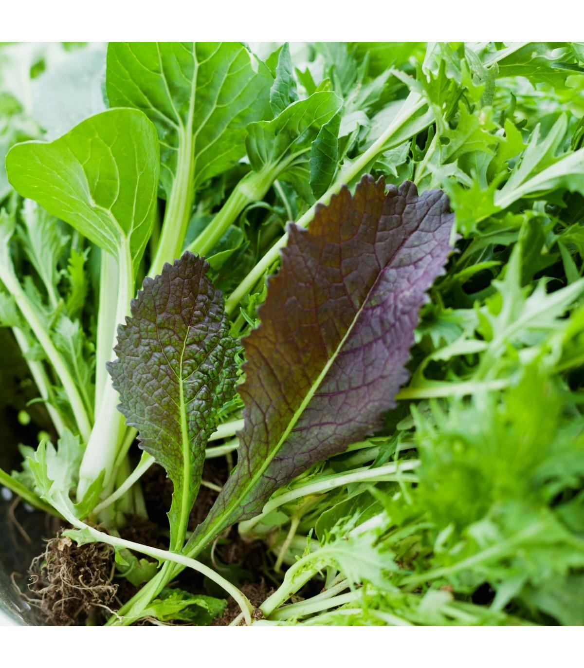 Mix aromatických šalátov - semená - 60 ks