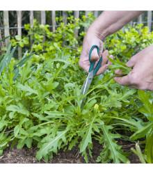 Rukola siata Dentelata - Eruca vesicaria - semená - 0,5 g