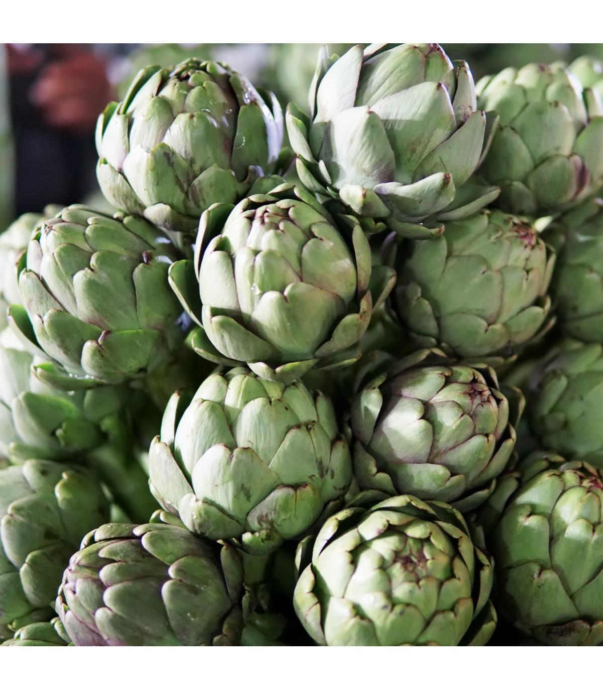 Artičoka záhradná Green Globe - Cynara scolymus - semená artičoky - 20 ks