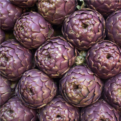 Artičoka fialová - Cynara scolymus - semená artičoky - 15 ks