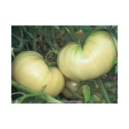 Paradajka biela-semená rajčiakov-6 ks