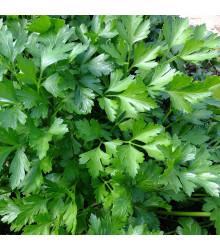 Bio petržlenová vňať Gigante di Napoli - Petroselinum crispum - bio semená petržlenovej vňate - 200 ks