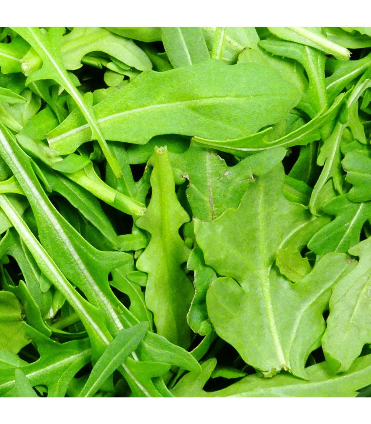 Rukola siata Viktoria - Eruca vesicaria - semená - 0,5 g