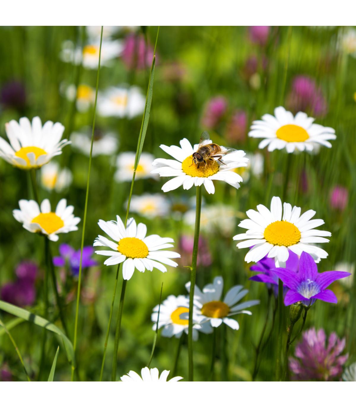 Zmes letničiek - Letničky vábiace hmyz - semená letničiek - 1 g