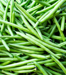 Fazuľa popínavá Enorma - Phaseolus coccineus L. - semená - 20 ks