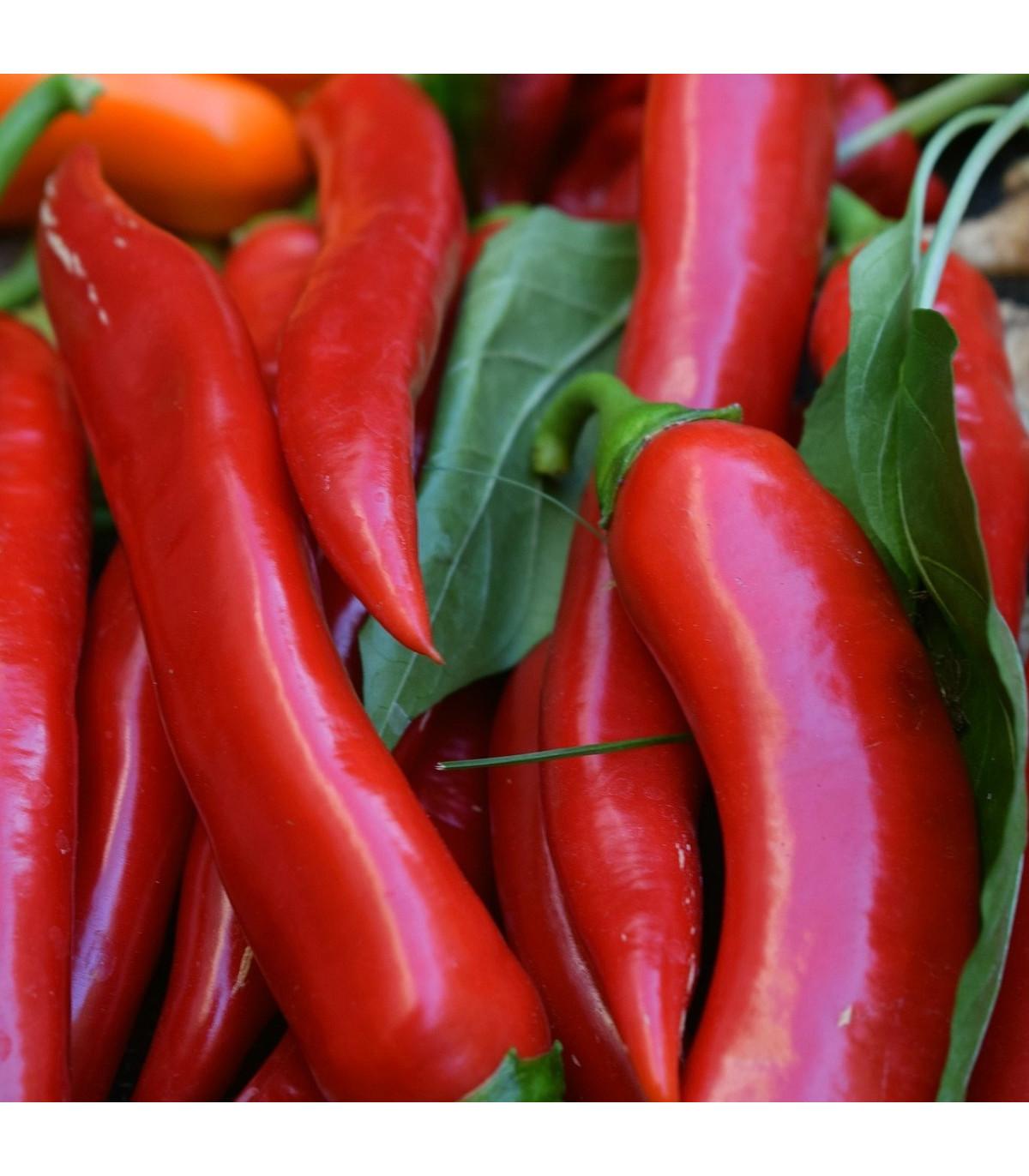 Chilli Kajenské korenie - Capsicum Annuum - semená - 8 ks