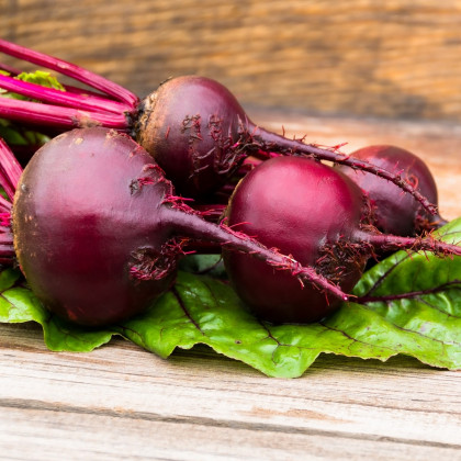 Cvikla šalátová - červená guľatá repa - Beta vulgaris - semená - 140 ks