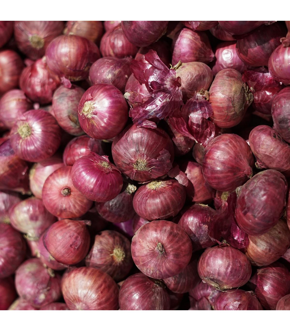 Cibuľa jarná kuchynská Brunswijker - Allium cepa - semená - 0,5 g