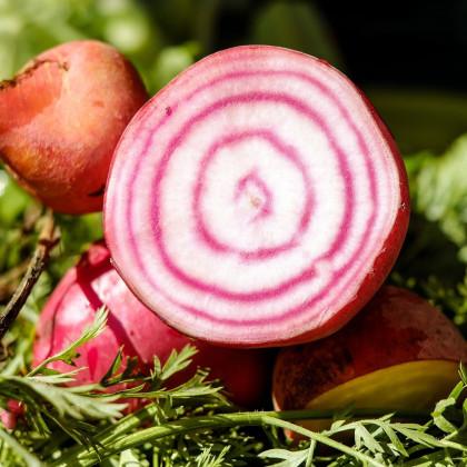 Repa talianska - Beta vulgaris - semená repy - semiačka - 8 ks