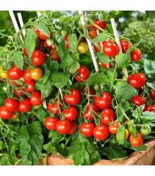 Paradajka kolíková Donna - Lycopersicon esculentum - rajčiak - semená - 5 ks