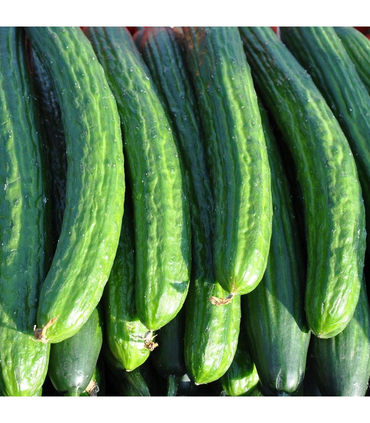 BIO Uhorka šalátová poľná - semená uhorky - semiačka - 0,3 g