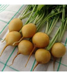 Reďkovka Zlata - Raphanus sativus - semená reďkovky - 200 ks
