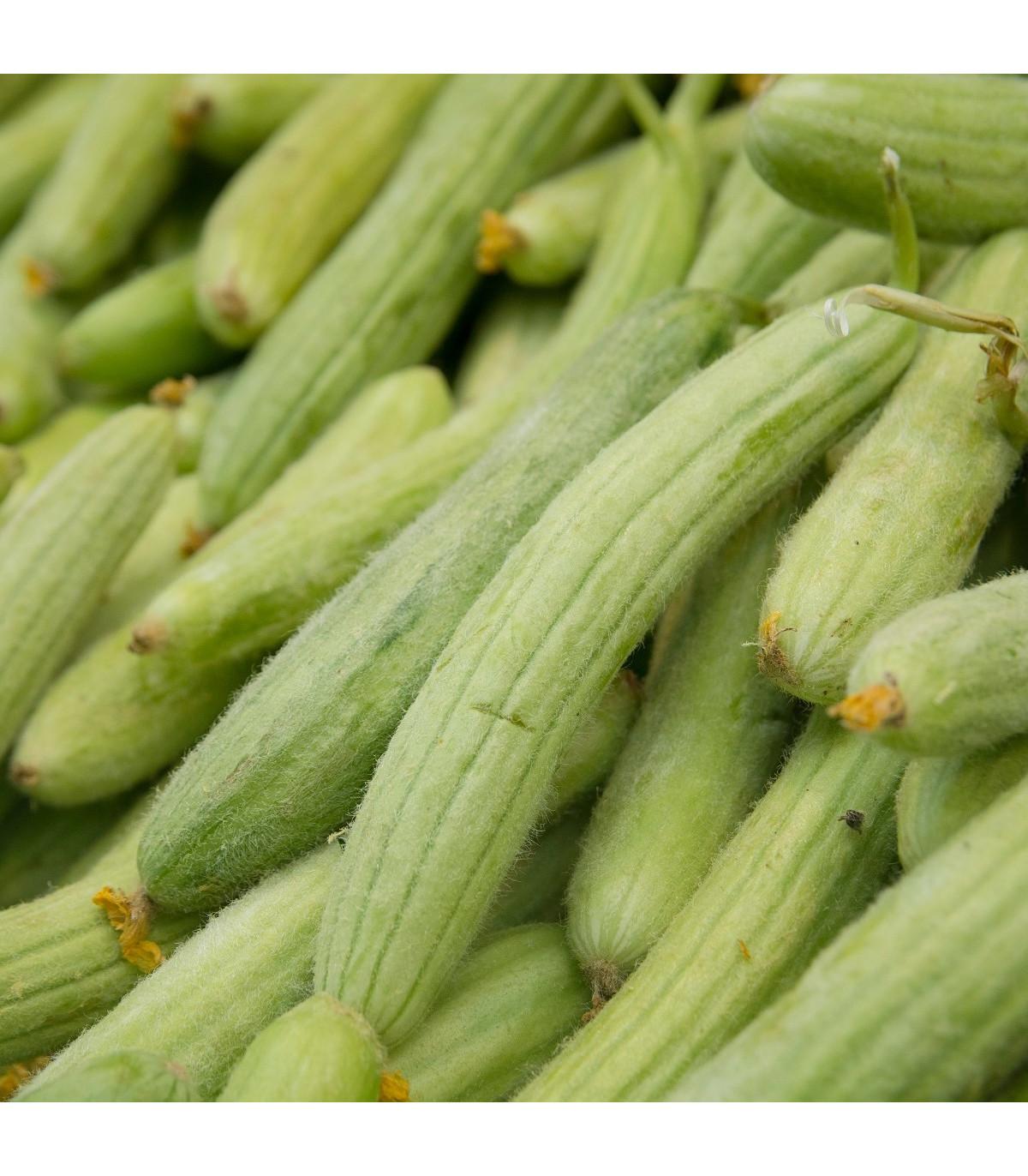 Uhorka arménska - Cucumis melo - semená - 6 ks
