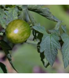 Paradajka Limetto F1 - Lycopersicon esculentum - rajčiak - semená - 5 ks