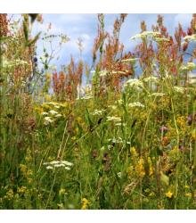 Kvetinová lúka pre motýle - Planta Naturalis - osivo lúčnych kvetov - 10 g
