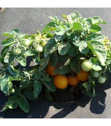 Paradajka kríčková Venus - Lycopersicon esculentum - rajčiak - semená - 10 ks