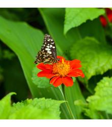 Kvetinová zmes pre motýle - semená pre motýle - 3 gr