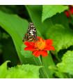 Kvetinová zmes pre motýle - semená pre motýle - 3 g