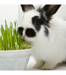 Tráva pre králiky - tráva pre domácich maznáčikov - semená - semiačka - 15 gr