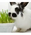 Tráva pre králikov - tráva pre domácich mazlíčkov - semena - predaj semien - 15 gr