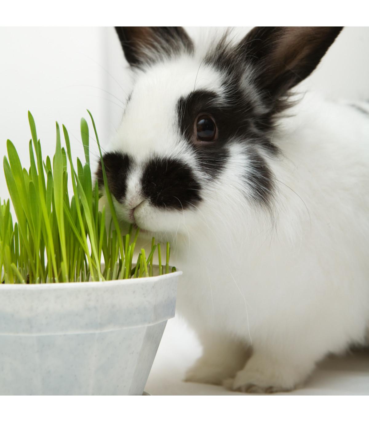 Tráva pre králiky - semená trávy pre králiky - 15 g