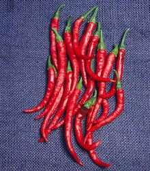 Kajenské korenie - Cayenne pepper - EXTRA dlhý -semená korenia - semiačka - 6 ks
