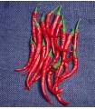Kajenský peper - Cayenne pepper - EXTRA dlhý - 6 ks