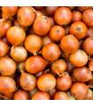 BIO Cibuľa jarná žltá - BIO osivá - semená cibule - 5 gr