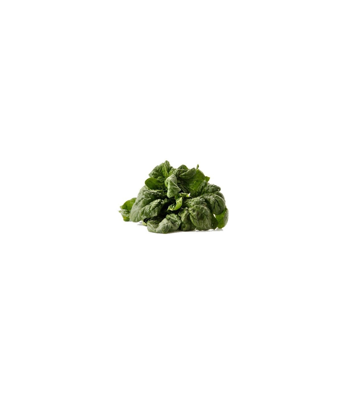 BIO Špenát siaty - Spinacia oleracen L. - semená bio osív - 12 gr