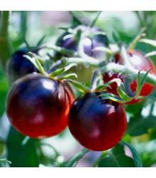Paradajka čierna Cherry - Lycopersicon esculentum - rajčiak - semená - 6 ks