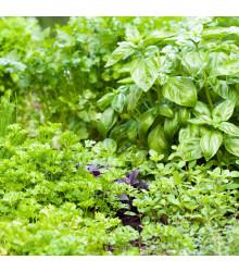 Aromatické bylinky a korenie - zmes semien - 0,5 g