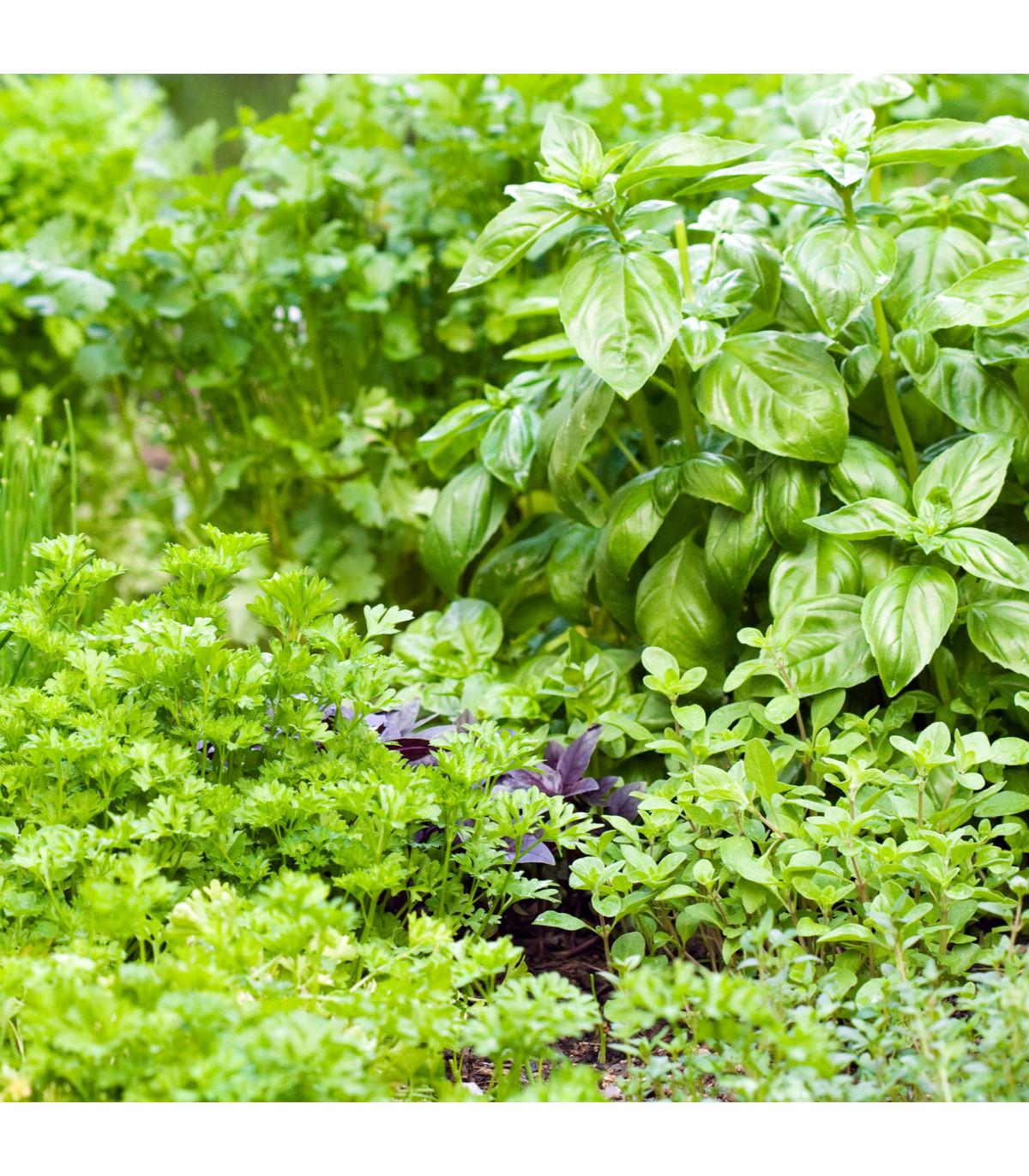 Aromatické byliny - zmes - semená bylín - 0,2 g