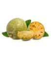 Oslizák ľúbezný - Aegle marmelos - predaj semien - 3 ks