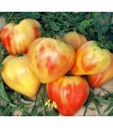 Paradajka ruská oranžová - semená paradajky - semiačka - 6 ks