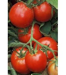 Paradajka Legenda - Lycopersicon esculentum - rajčiak - semená - pôvodné odrody - 6 ks