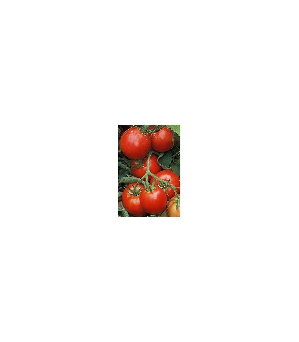 Paradajka Legenda - predaj semien rajčiakov - pôvodnej odrody paradajok - 6 ks