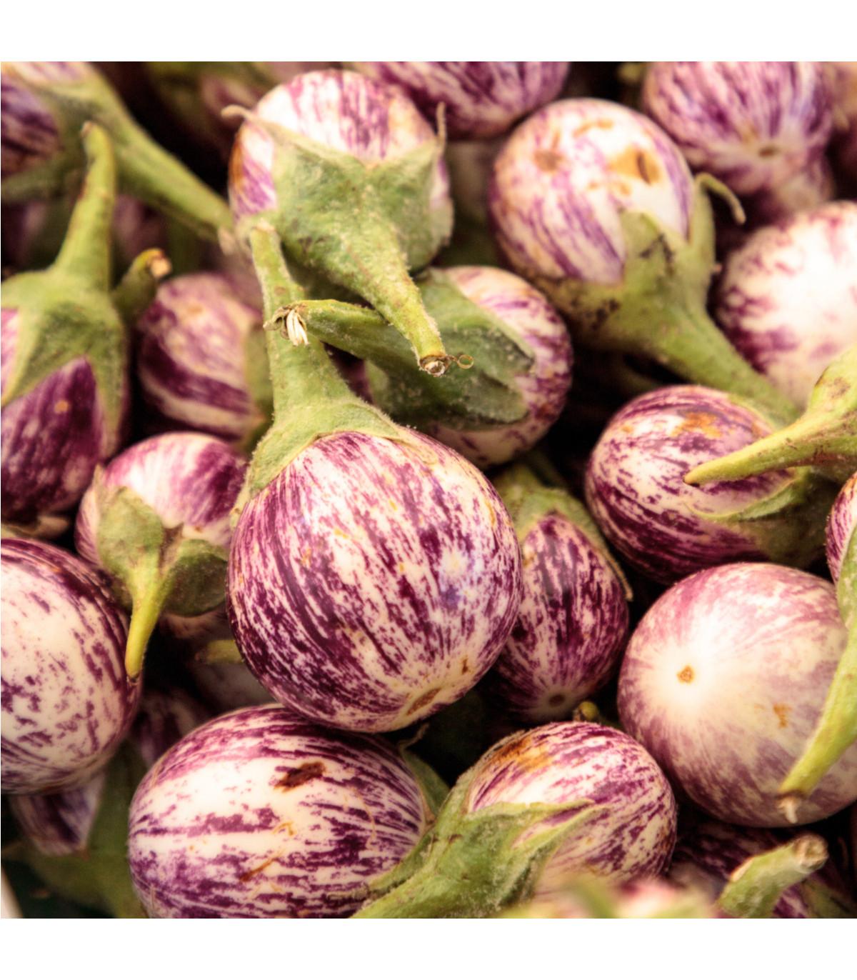 Baklažán Listada - predaj semien baklažánu - 7 ks