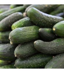 Šalátová uhorka Delikates - semená uhorky - semiačka - 20 ks