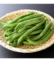 Fazuľa kríčková Maxi - zelená - semená fazule - 30 ks