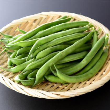 Fazuľa kríčková Maxi - Phaseolus vulgaris - semená - 30 ks