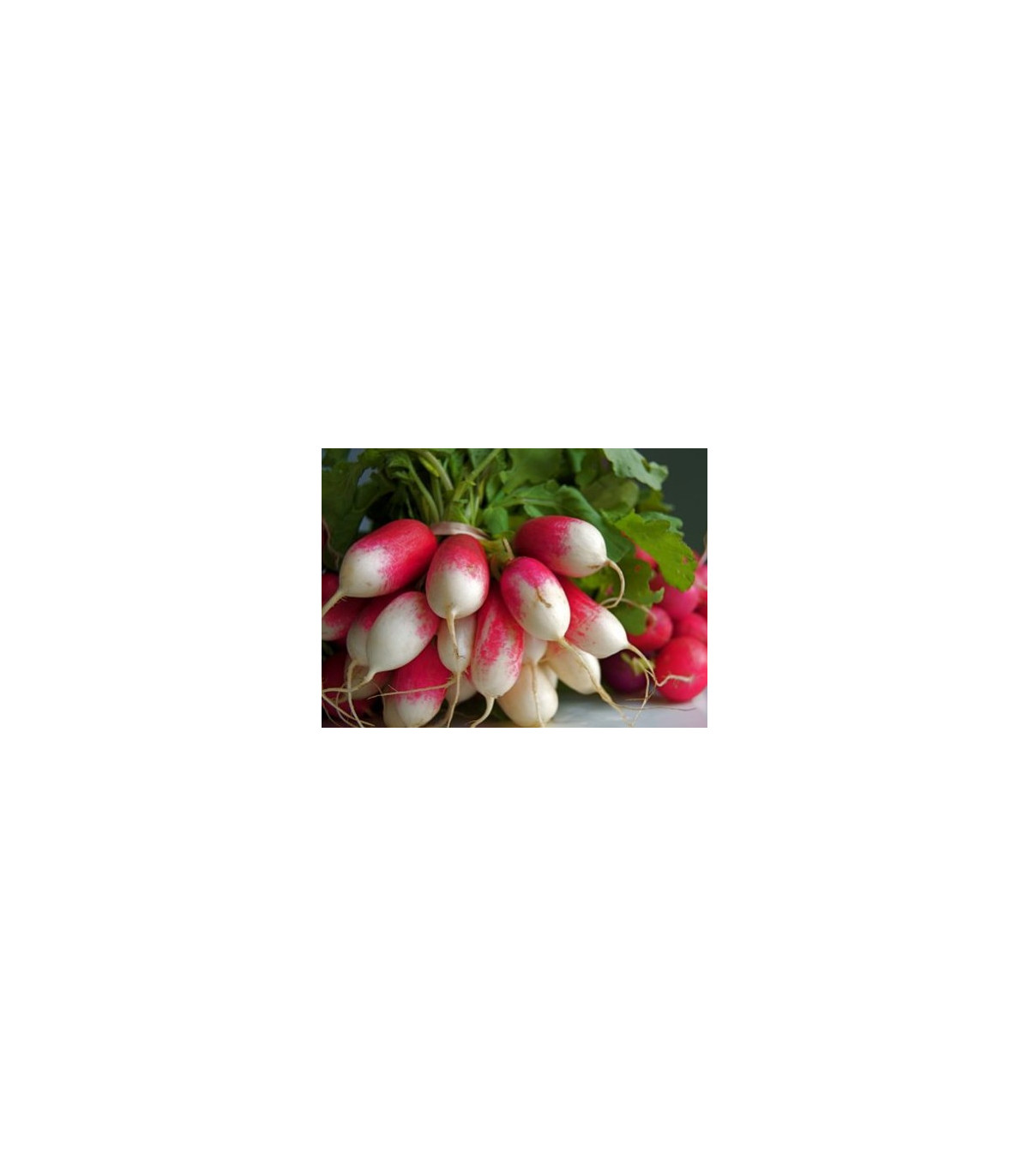 BIO Reďkev francúzska červenobiela - semená reďkovky - 0,3 g