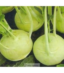 Kaleráb extra jemný - Brassica oleracea - semená kalerábu - semiačka - 50 ks