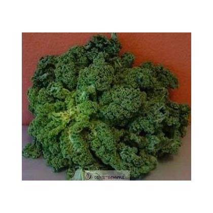 Kel kučeravý zelený zimný - semená kelu- 150 ks