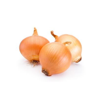 Semená cibule
