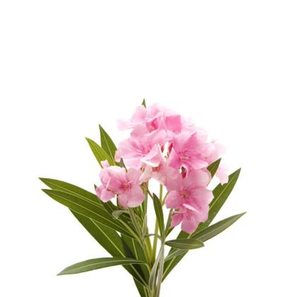 Iné exotické okrasné rastliny
